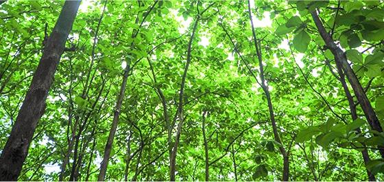 Environnement, Groupe Somavrac
